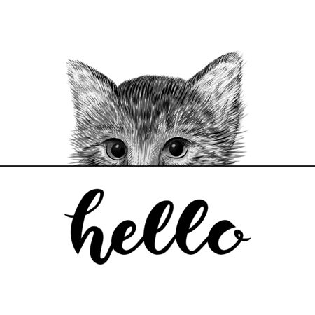 Little cat, kitten black and white vector illustration. Hand drawn sketch drawing. Pet portrait, peeking out from behind a sheet of paper. Cute animal background. Hand drawn lettering - hello