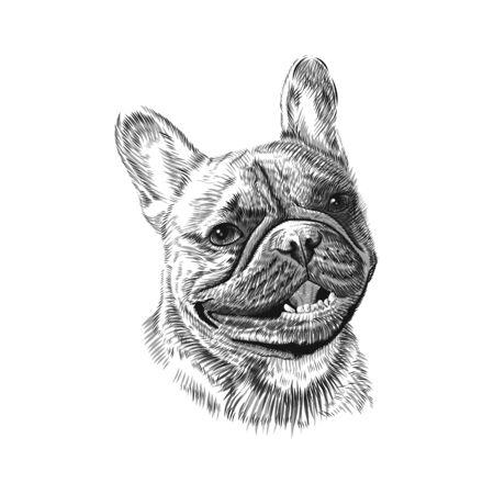 French Bulldog head, hand drawn pet animal sketch. Vector black and white monochrome illustration.