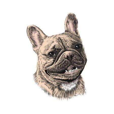 French Bulldog head, hand drawn pet animal sketch. Vector colorful illustration. Illustration