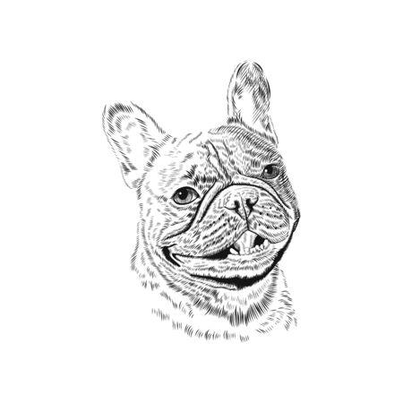 French Bulldog hand drawn pet animal sketch