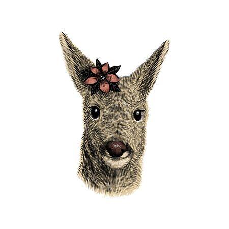 Roe deer cub sketch, vector illustration. Hand drawn wild animal head portrait with flower.