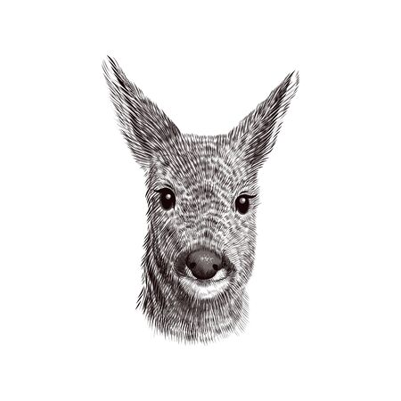 Roe deer cub sketch, vector illustration. Hand drawn wild animal head portrait.