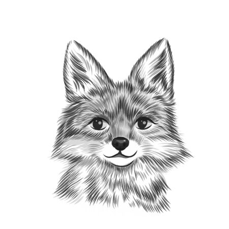 Little fox, animal black and white vector illustration. Hand drawn sketch drawing. Beast portrait, Cute fox head background.