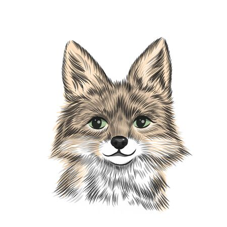 Little fox, animal vector illustration in color. Hand drawn sketch drawing. Beast portrait, Cute fox head background. Illustration