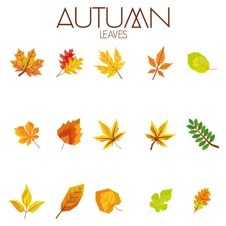 Set Of Different Abstract Autumn Leaves Vector
