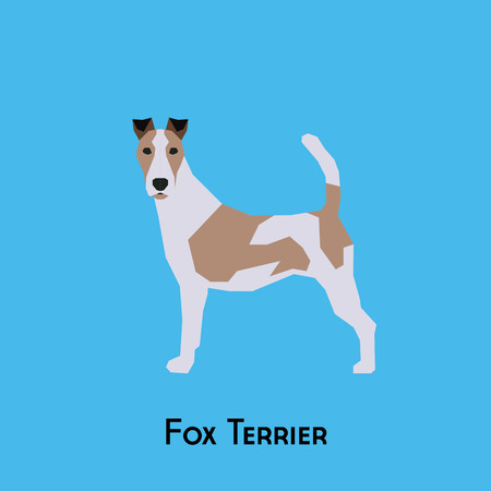 Isolated fox terrier on a blue background