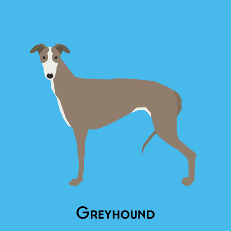 doggies: Isolated cute greyhound on a blue background Illustration