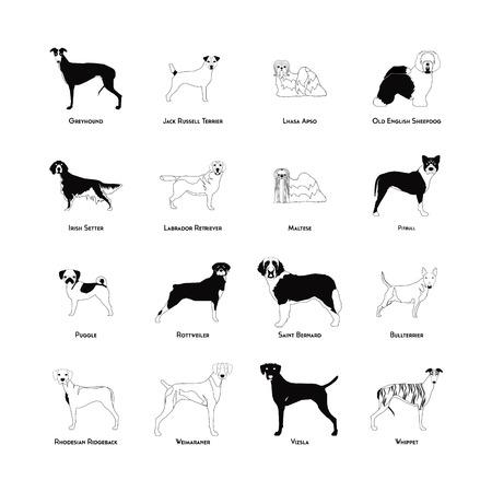 Set van silhouetten van de verschillende hondenrassen op een witte achtergrond