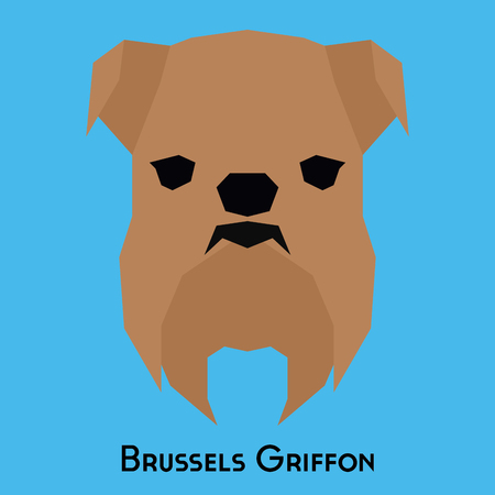 griffon: Isolated Brussels Griffon on a blue background