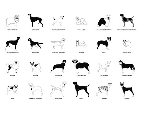 saint bernard: Set of silhouettes of different dog breeds on a white background