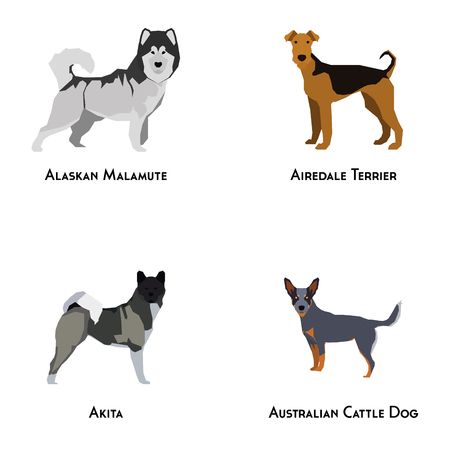 alaskan malamute: Set of different dog breeds on a white background Illustration