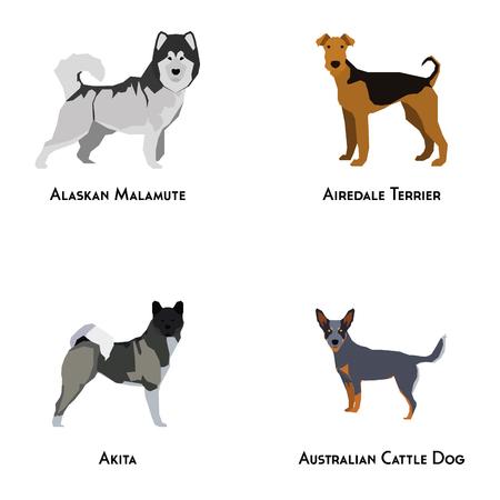 Set of different dog breeds on a white background Vector Illustration