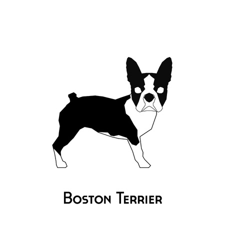 Isolated silhouette of a boston terrier on a white background