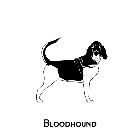 bloodhound: Isolated silhouette of a bloodhound dog on a white background Illustration
