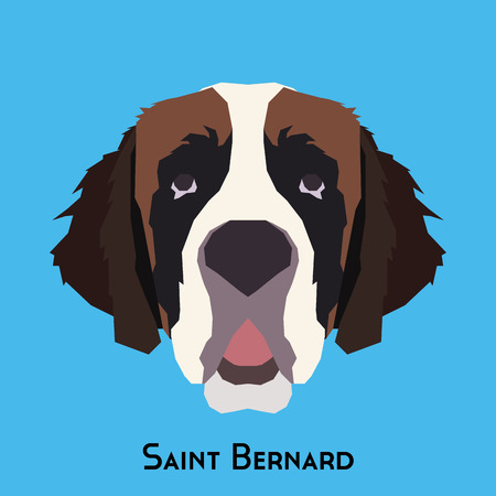 bernard: Isolated Saint Bernard on a blue background
