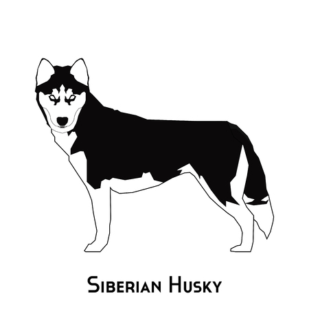 siberian husky: Isolated silhouette of a Siberian Husky on a white background Illustration