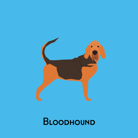 bloodhound: Isolated bloodhound dog on a blue background Illustration