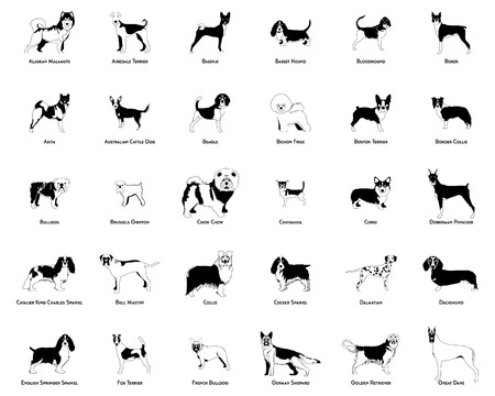 Set of silhouettes of different dog breeds on a white background