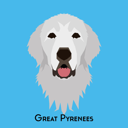 pyrenees: Isolated great pyrenees on a blue background