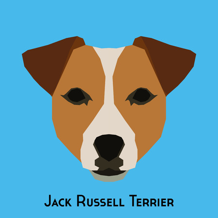 russell: Isolated Jack Russell Terrier on a blue background