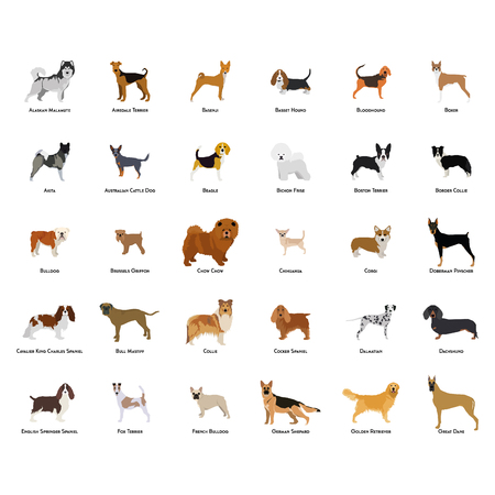 Set of different dog breeds on a white background Vectores