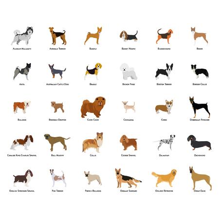 Set of different dog breeds on a white background Ilustração
