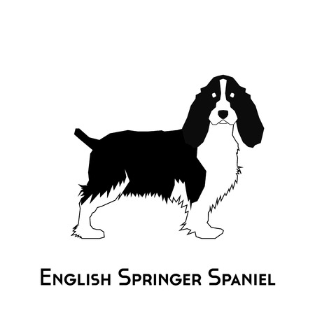 Isolated silhouette of a English Springer Spaniel on a white background Vettoriali