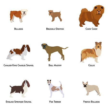 breeds: Set of different dog breeds on a white background Illustration