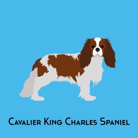 Isolated Cavalier King Charles Spaniel on a blue background Illustration