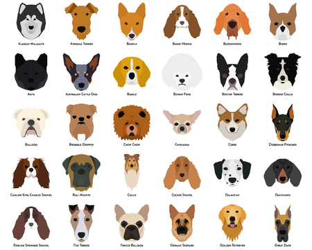Set of different breeds of dogs on a white background