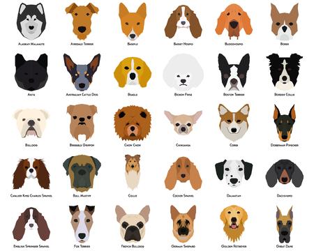 Set van verschillende rassen van honden op een witte achtergrond