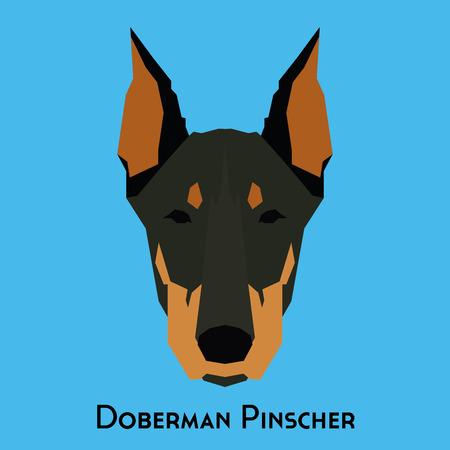 pinscher: Isolated doberman pinscher on a blue background
