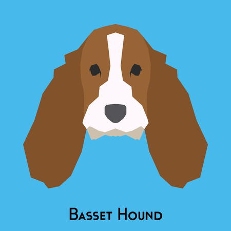 hound: Isolated basset hound dog on a blue background