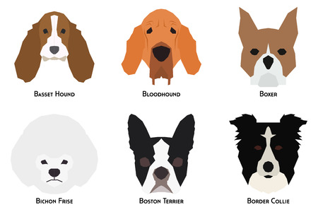 small group of animal: Set of different breeds of dogs on a white background