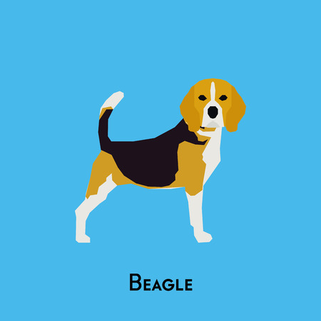 doggies: Isolated cute Beagle on a blue background