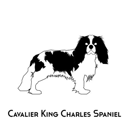 charles: Isolated silhouette of a Cavalier King Charles Spaniel on a white background