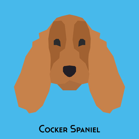 cocker spaniel: Isolated cocker spaniel on a blue background