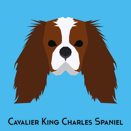 cavalier king charles spaniel: Isolated Cavalier King Charles Spaniel on a blue background Illustration