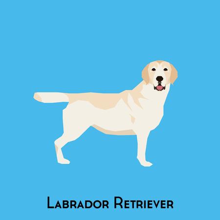 labrador: Isolated Labrador Retriever on a blue background