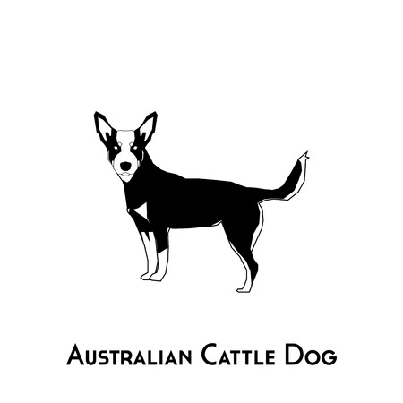 Isolated silhouette of an Australian Cattle dog on a white background