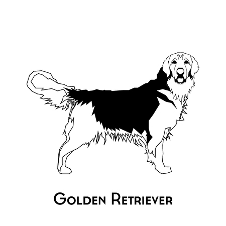 golden retriever: Isolated silhouette of a golden retriever on a white background Illustration
