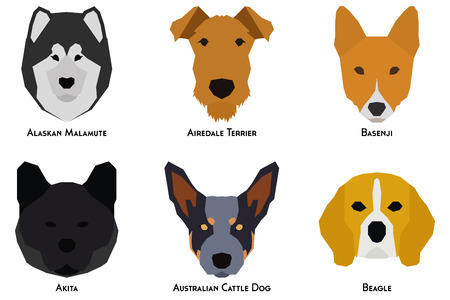 airedale terrier: Set of different breeds of dogs on a white background