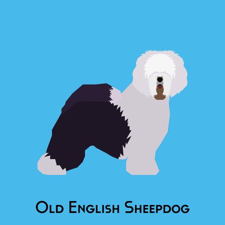 old english: Isolated Old English Sheepdog on a blue background