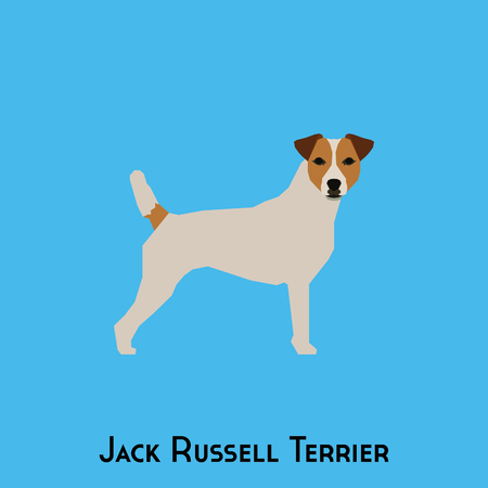 jack russell: Isolated Jack Russell Terrier on a blue background