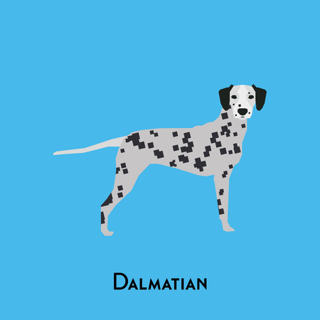 dalmatian: Isolated cute dalmatian on a blue background Illustration