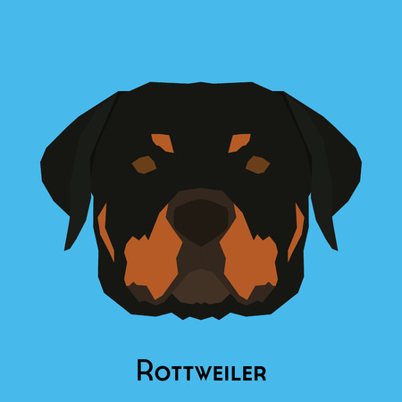 Isolated cute Rottweiler on a blue background
