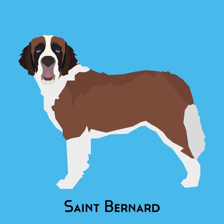 Isolated Saint Bernard on a blue background