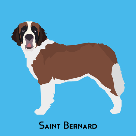 Isolated Saint Bernard on a blue background