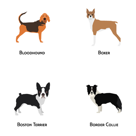 border collie: Set of different dog breeds on a white background Illustration