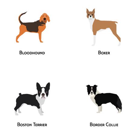 Set of different dog breeds on a white background Illustration